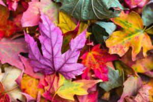 Mit Laub können Kinder im Herbst viele Aktivitäten unternehmen